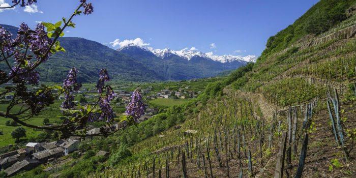 Da Tirano a Bianzone lungo il sentiero del Valtellina Wine Trail