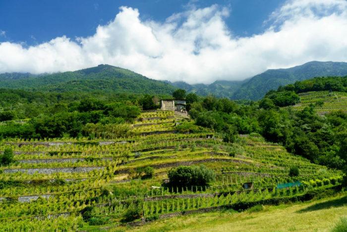 Escursione a Traona al castello di Domofole, in Valtellina